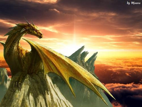 Présentation de Etoile Blanche Dragon10