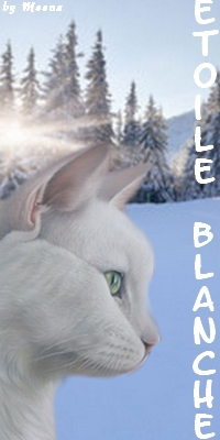 Présentation de Etoile Blanche Etoile18