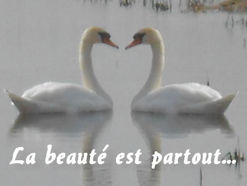 Présentation de Etoile Blanche La_bea10