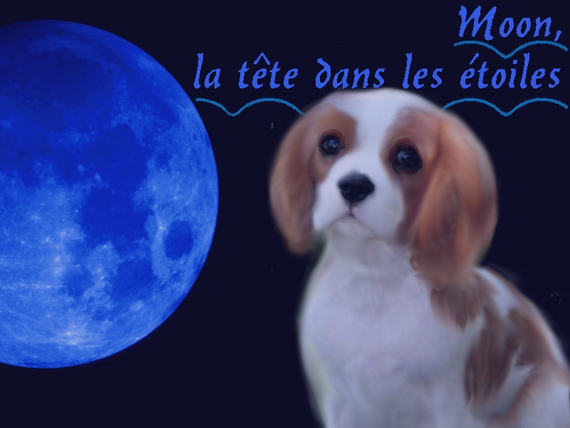 Présentation de Etoile Blanche Moon10