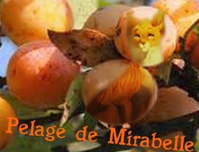Présentation de Etoile Blanche Pelage10