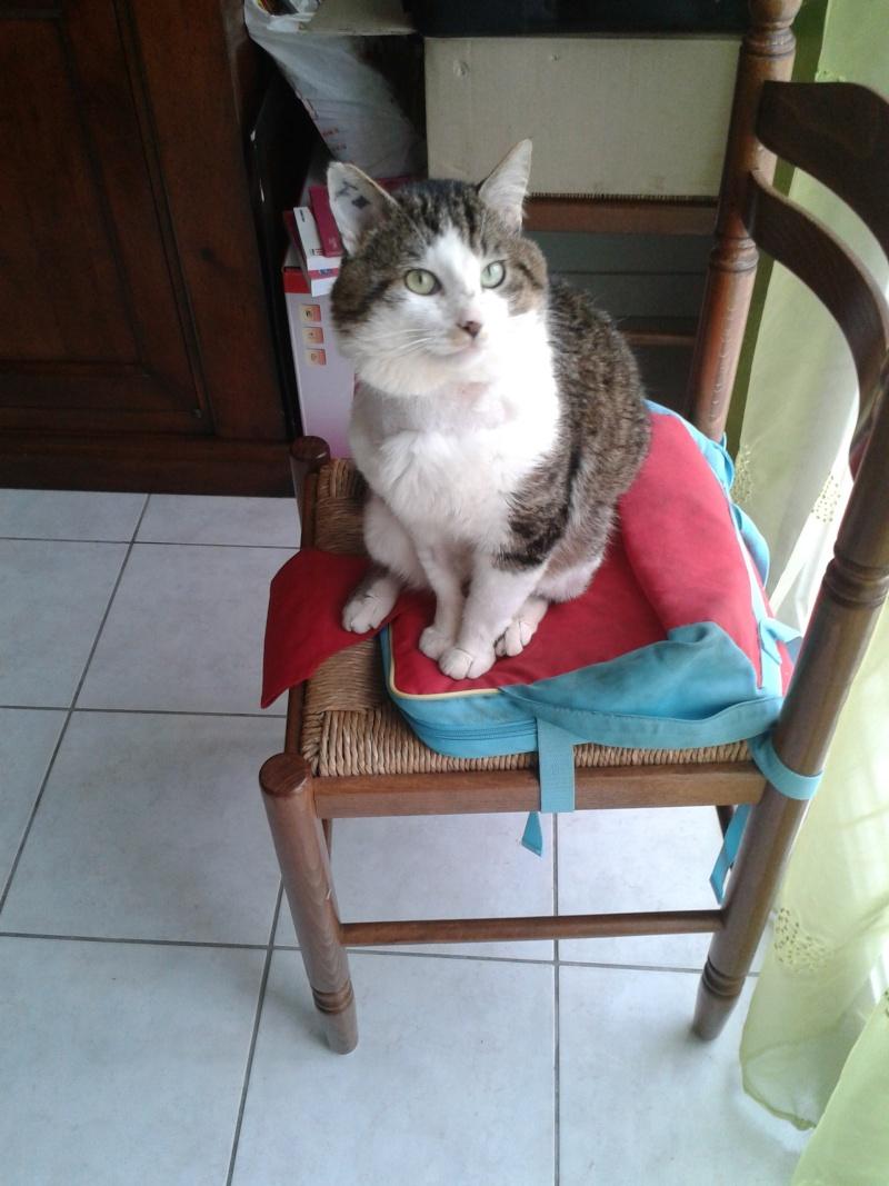 ivan - Ivan, mâle blanc et gris tigré, né le 01/01/2013 2_avri10