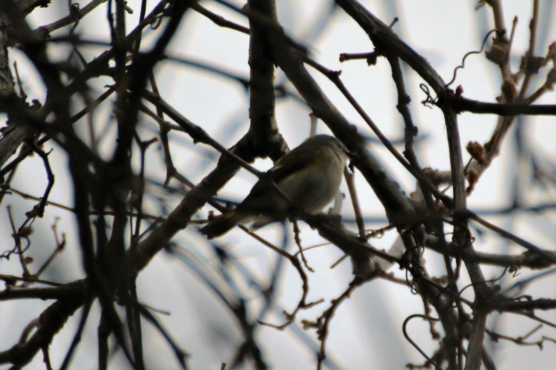 Quels sont ces oiseaux ? Img_1410