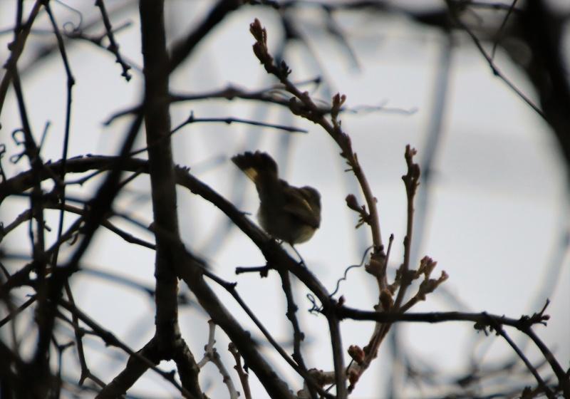 Quels sont ces oiseaux ? Img_1411