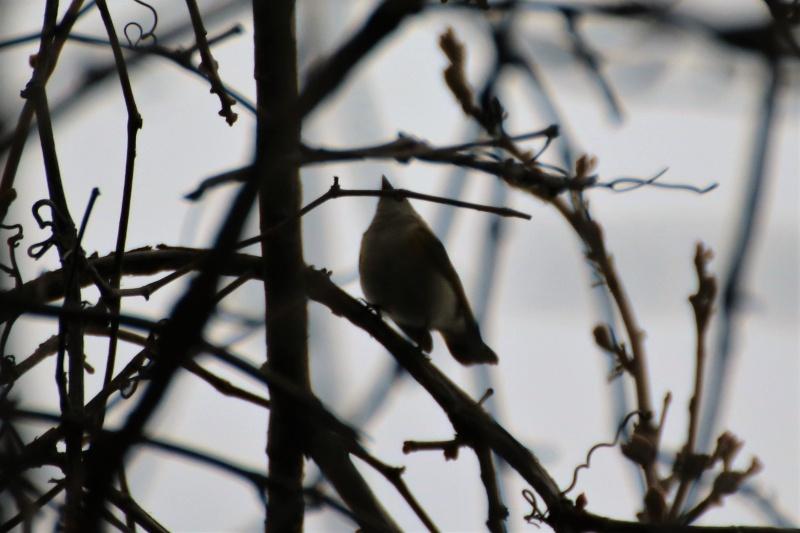 Quels sont ces oiseaux ? Img_1412