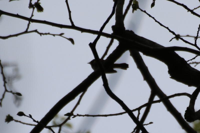 Quels sont ces oiseaux ? Img_1710