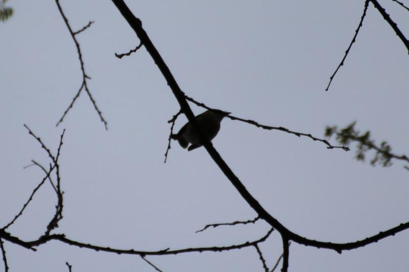 Quels sont ces oiseaux ? Img_1711