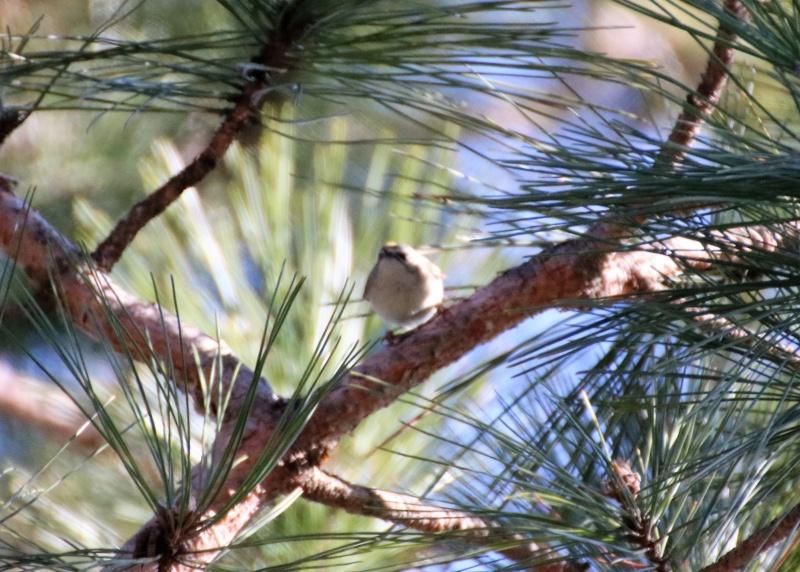 Quel est cet oiseau ? Img_3411