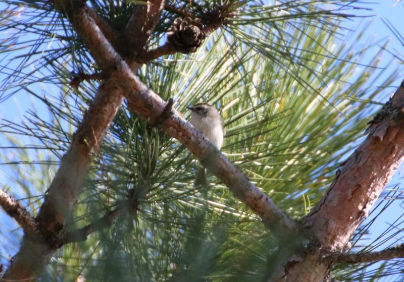 Quel est cet oiseau ? Img_3412