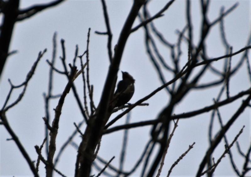 Quel est cet oiseau mystère ? Img_4710