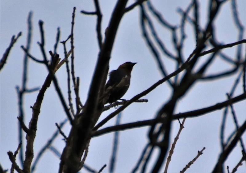 Quel est cet oiseau mystère ? Img_4711