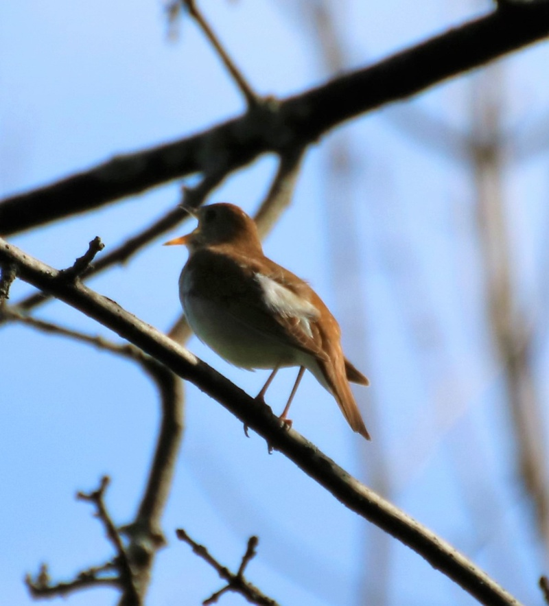 Quel est le nom de cet oiseau ? Img_5811