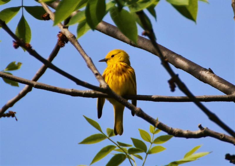 Une petite jaune Img_6019