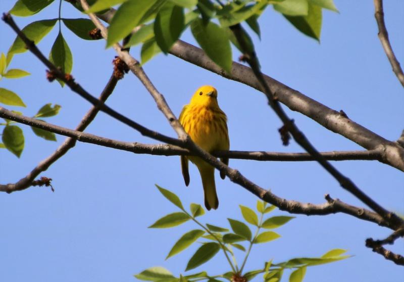Une petite jaune Img_6020