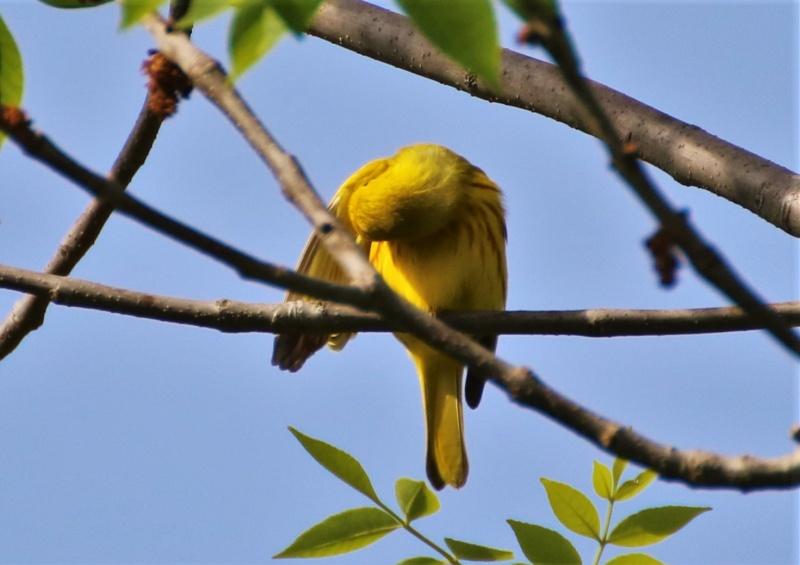 Une petite jaune Img_6021