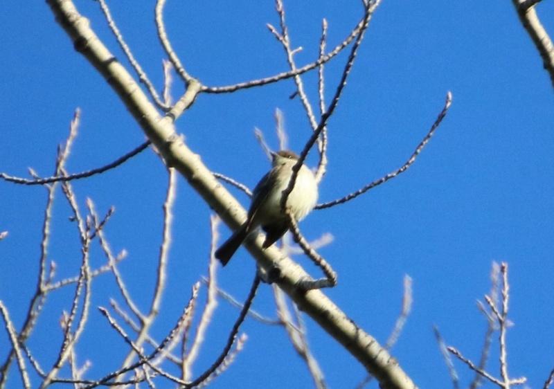 Quel est ce petit oiseau ? Img_9710