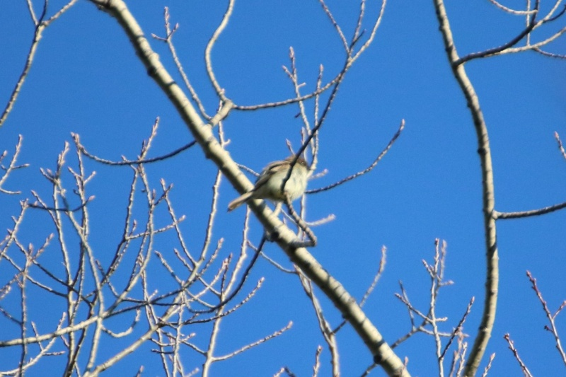 Quel est ce petit oiseau ? Img_9711