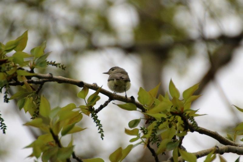 Quel est cet oiseau ? Viryo_10