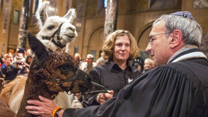Le Messe des Animaux à l'Eglise Animal10