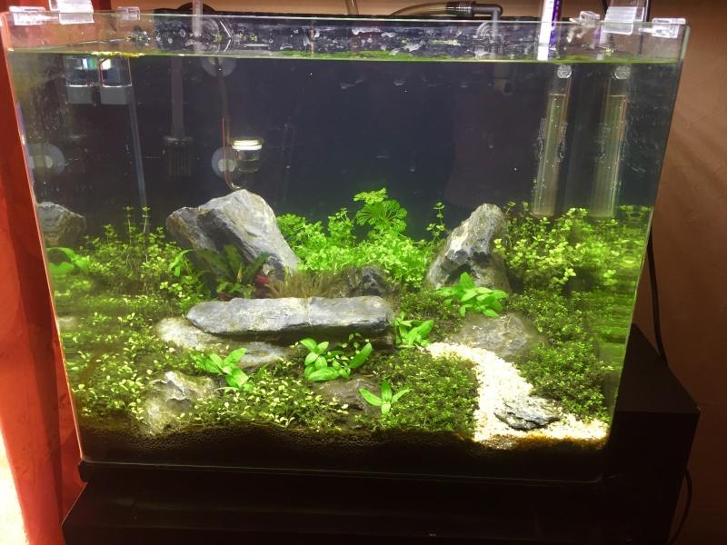 Bac 46 L Aquascaping Iwagumi Image27