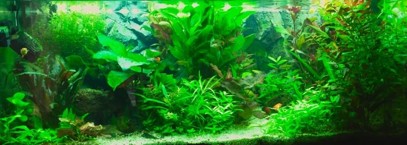 Présentation Bac plante Rio Juwel 180 Image42