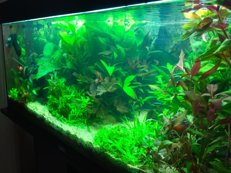 Présentation Bac plante Rio Juwel 180 Image43