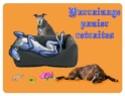 Forumactif.com : SOS Galgos Podencos & chiens d'eau 12919310