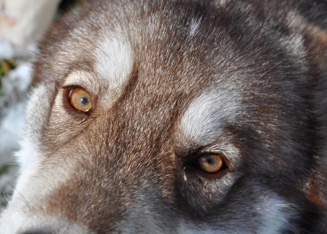 Suka's Scrapbook Eyes_011