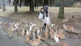Au Japon: L'île aux  chats , l'île aux lapins, l'île aux renards   .... 526x2910