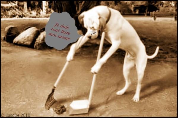 """Les crottes de chien """"verbalisées"""" F95e9510"""