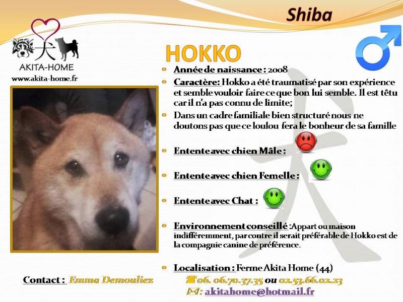 Hokko Shiba Inu 8 ans ASSO44 ADOPTE Hokko210