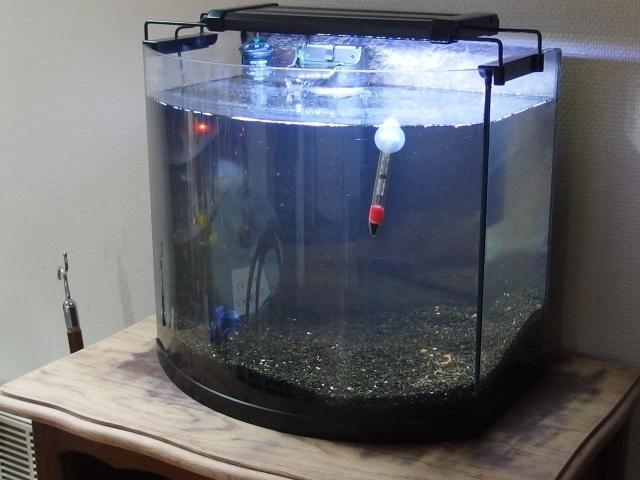 Betta Splendens - Bac 30 litres P5190014