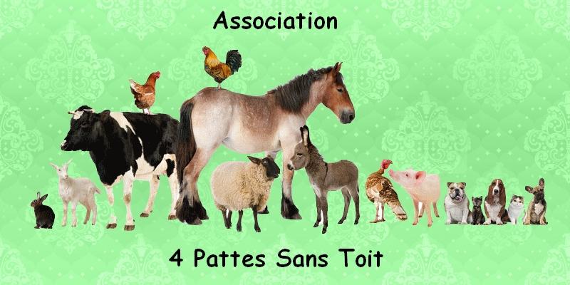 Association 4 Pattes Sans Toit