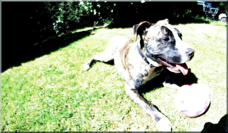 Sunbathing! Loulja10