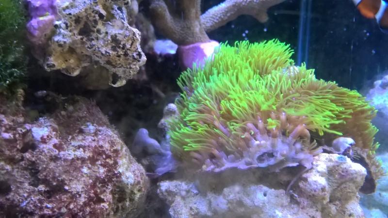 nano recif 30 litres Wp_20114