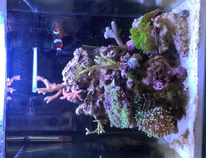 nano recif 30 litres Wp_20115