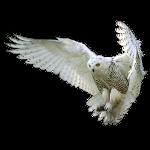 Unsere Daten Owl1_c12