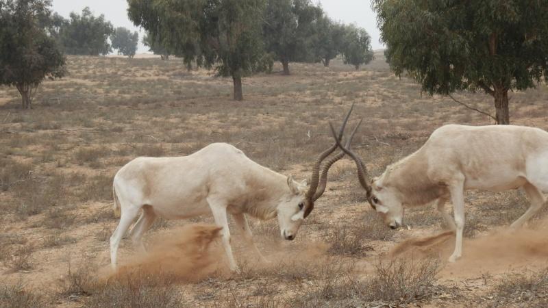 [Maroc Camp/Dernières nouvelles] Le TAKAT à SIDI BIBI P3300011