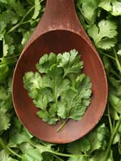 Best Herbs To Grow At Home Cilant11