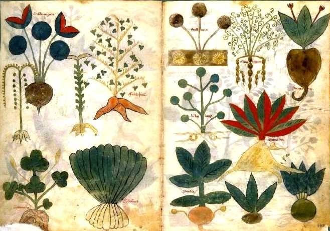Herbal Medicine Diosco10