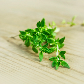 Best Herbs To Grow At Home Thyme10
