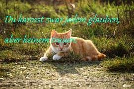 Ich gestehe - Seite 2 Cat11811
