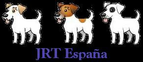 Jack Russell Terrier (JRT) España