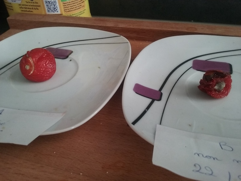 magnétisation des tomates 20160312
