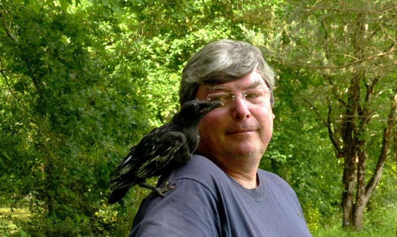 Bébé corneille ou corbeau P1120415