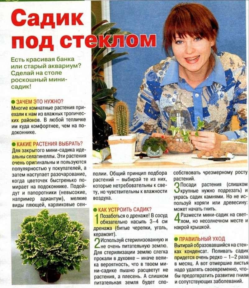 Сад в бутылке 000110
