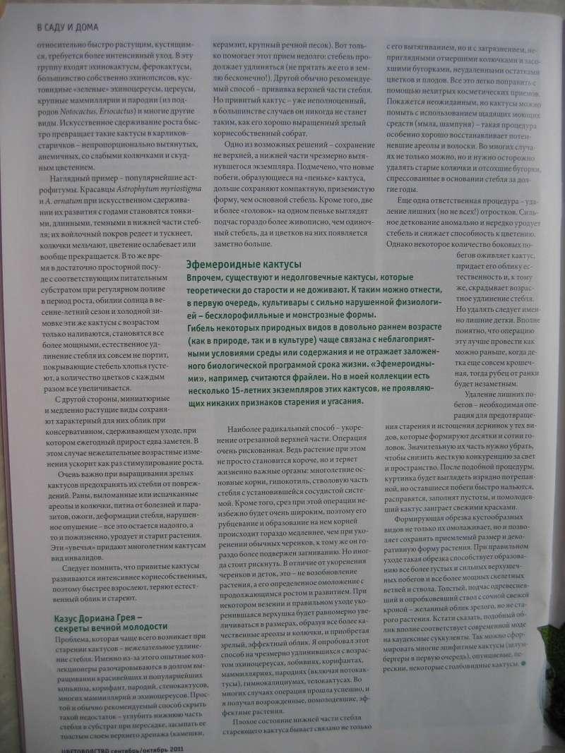Кактусы и суккуленты 0_6e5311