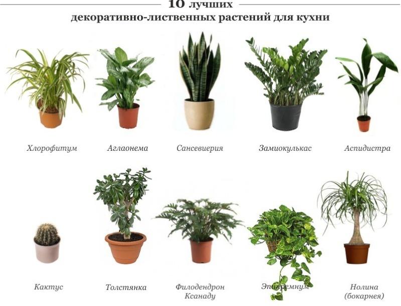 статьи о растениях из  газет и журналов - Страница 2 10-d0b10