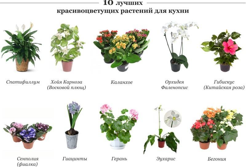 статьи о растениях из  газет и журналов - Страница 2 10-d0b11