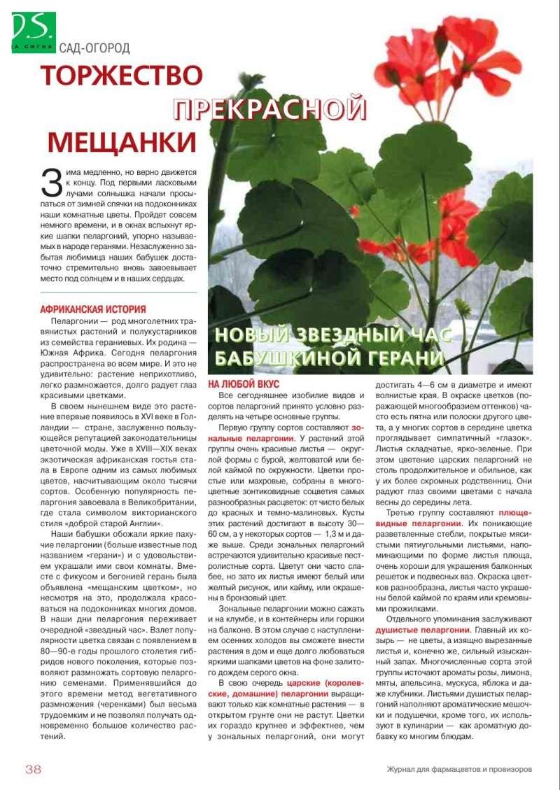 Пеларгония (Герань) 110